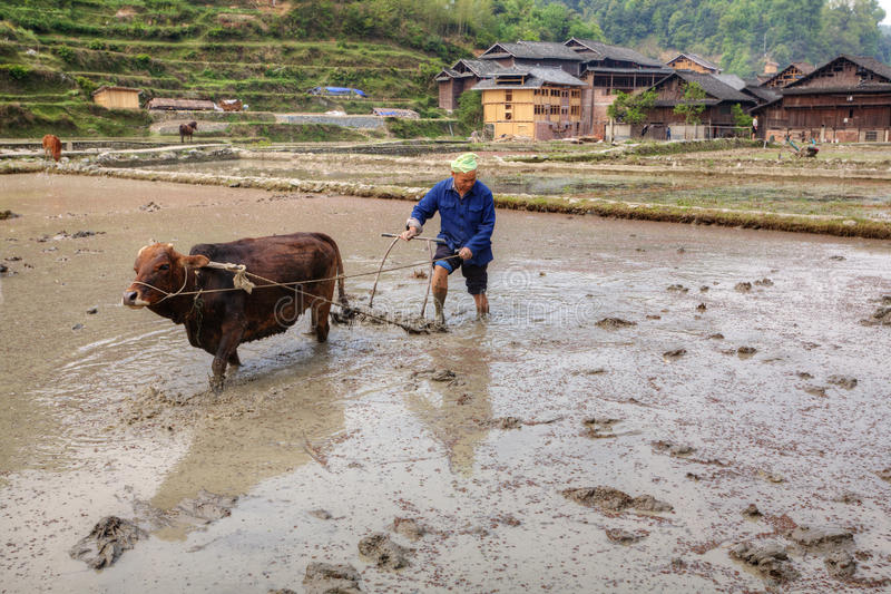 Chinese farmer tills soil, using red cow, Zhaoxing, Guizhou, Chi. Zhaoxing Village, Guizhou Province, China - April 9, 2010: Chinese farmer to plough the soil to royalty free stock photo