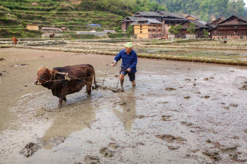 Chinese farmer tills soil, using red cow, Zhaoxing, Guizhou, Chi royalty free stock photo