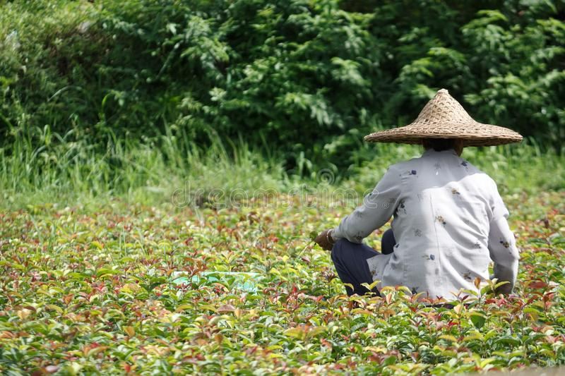 Chinese farmer in field royalty free stock photos