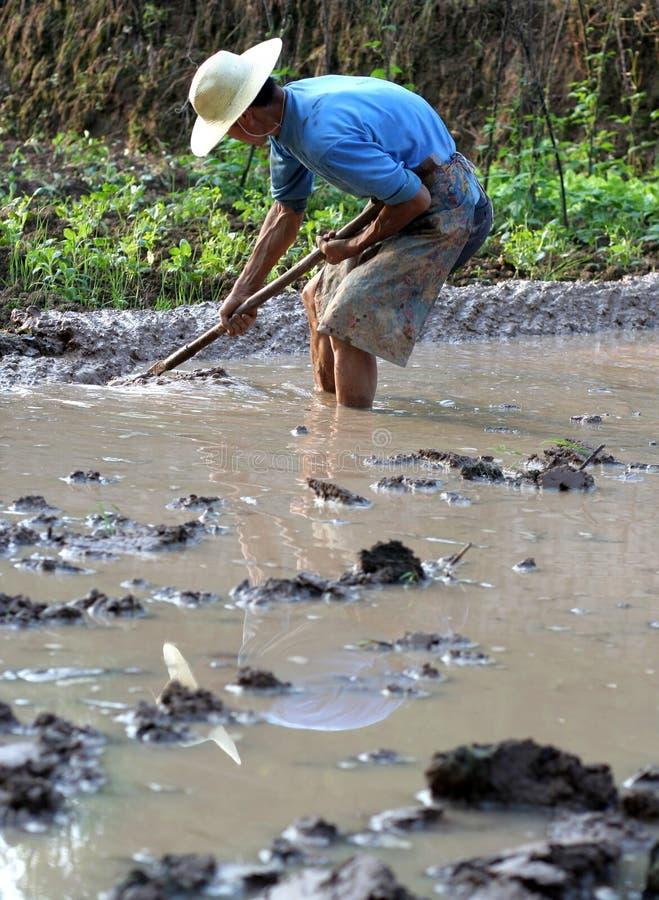 Chinese farmer  working