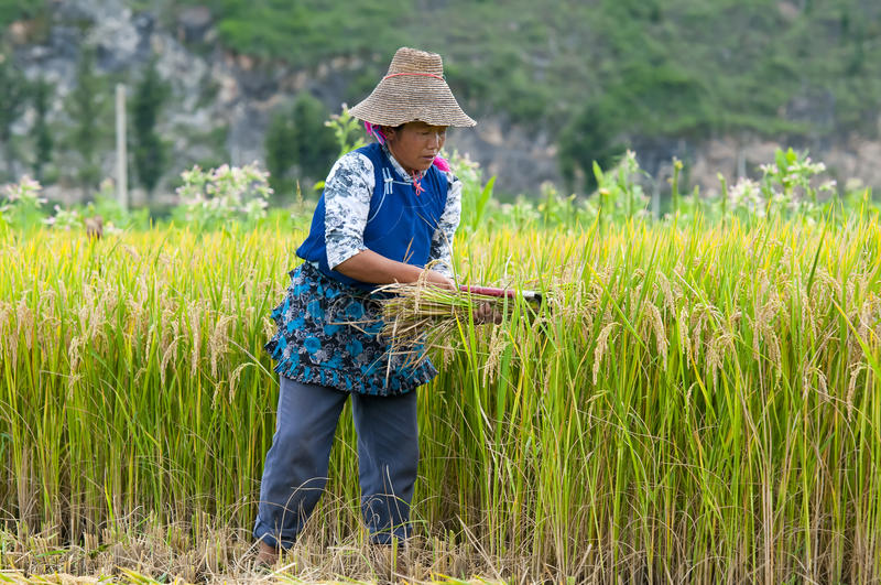 Chinese farmer works hard royalty free stock images