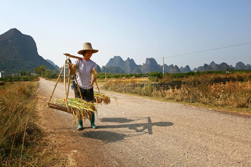 Chinese farmer works in a rice field stock photo