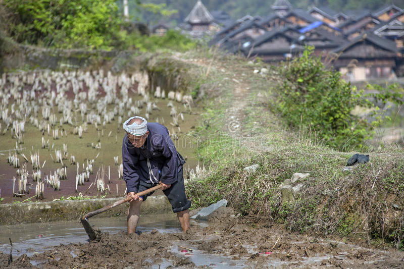 Chinese farmer works the soil in rice paddy using mattock. royalty free stock photo