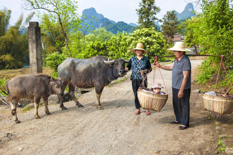 Chinese farmwomen with buffaloes and baby in basket royalty free stock photography