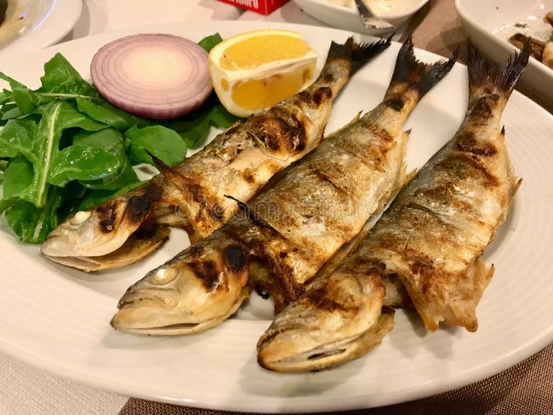 Chinese Fish Cinekop / Sarikanat Bluefish at Restaurant Served with Onions and Salad from Istanbul Turkey. Organic Food royalty free stock photo