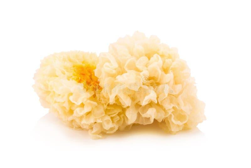 Chinese food tremella fuciformis white fungus isolated.  stock images