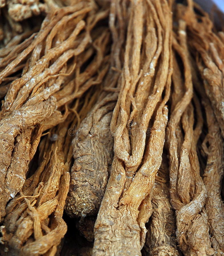Chinese ginseng. A kind of Chinese medicine--ginseng stock images