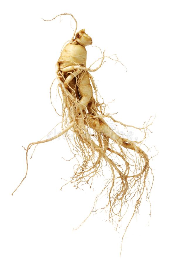 Chinese Ginseng royalty free stock images