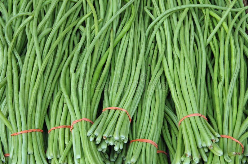 Chinese green long beans bunched for market. Chinese green long beans bunched with colorful rubber band for market stock photo