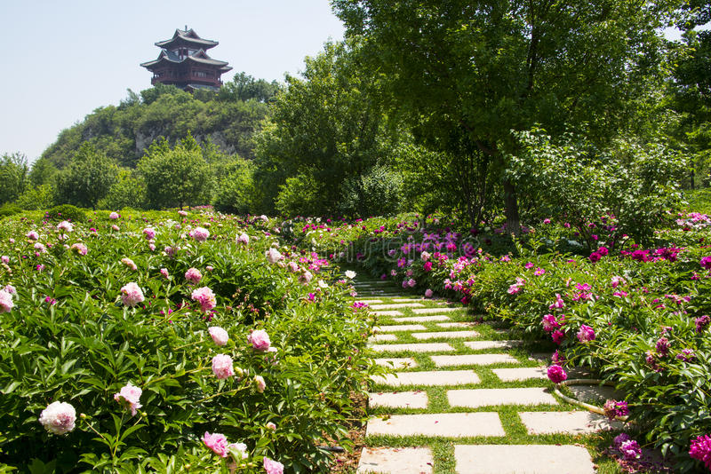 Chinese herbaceous peony Garden,Stone road,Pavilion. Asia Chinese, Beijing, Garden Expo,Garden landscape, the pavilion on the hill, the garden royalty free stock photography