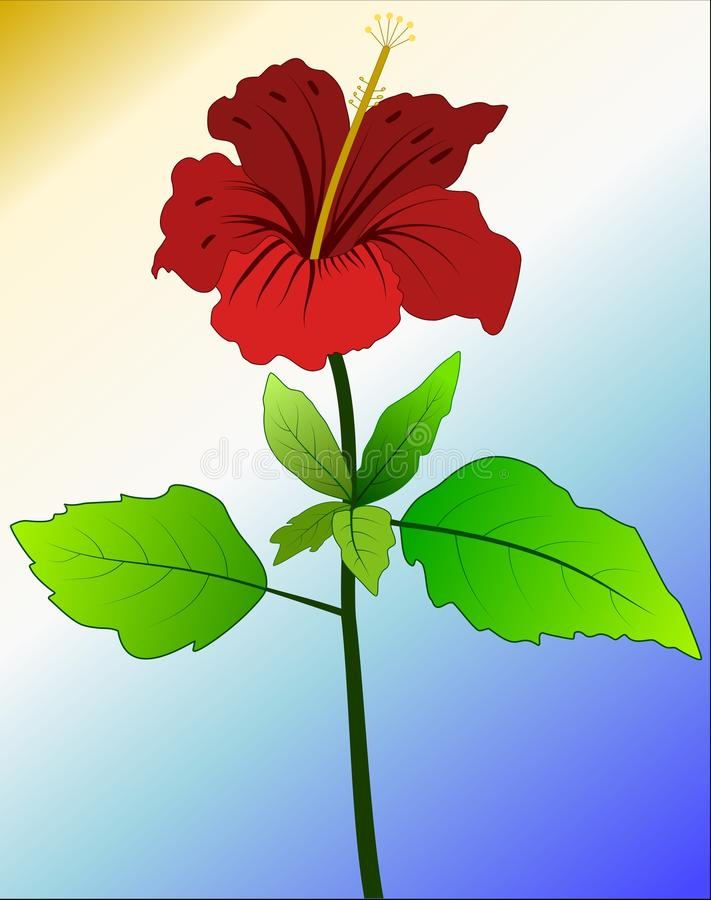 Chinese hibiscus vector illustration