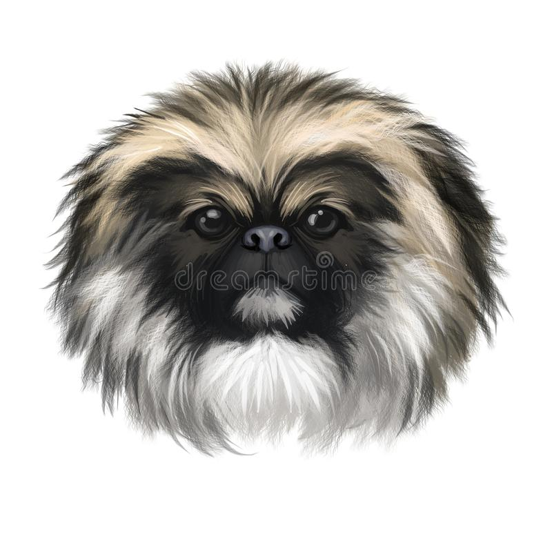 Chinese Imperial Dog dog breed isolated on white background digital art illustration. Cute pet hand drawn portrait. Graphic clipar. T design realistic animal royalty free illustration