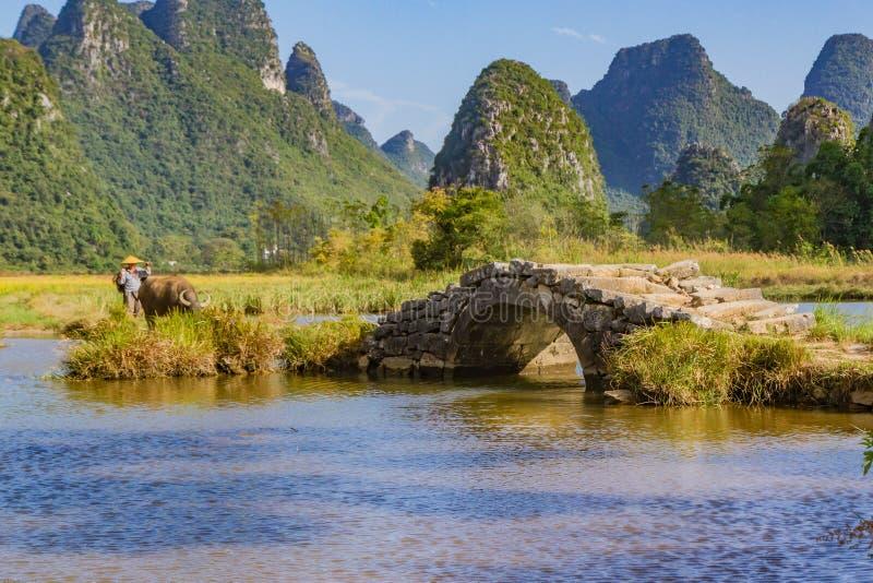 Chinese landbouwer die met waterbuffel in vallei lopen stock afbeeldingen