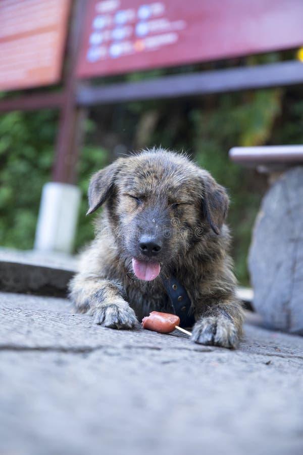 Chinese landelijke dog'sglimlach royalty-vrije stock fotografie