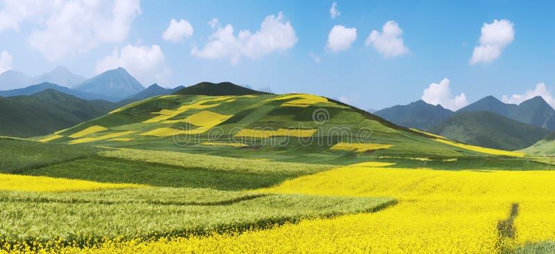 Chinese Landscape,Rape Field