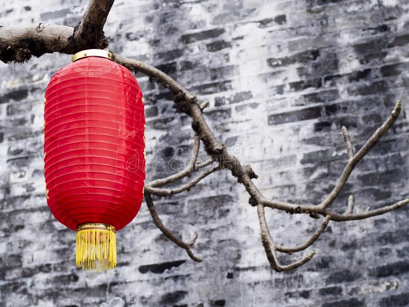 Chinese  lantern hanging on trees.Traditional Chinese lanterns .  red paper lanterns, Chinese New year decorations royalty free stock image