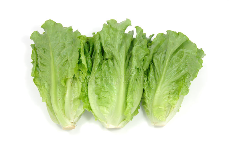Chinese lettuce stock photography