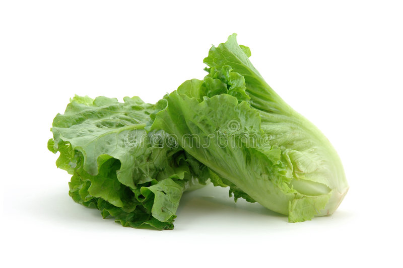 Chinese lettuce stock photos