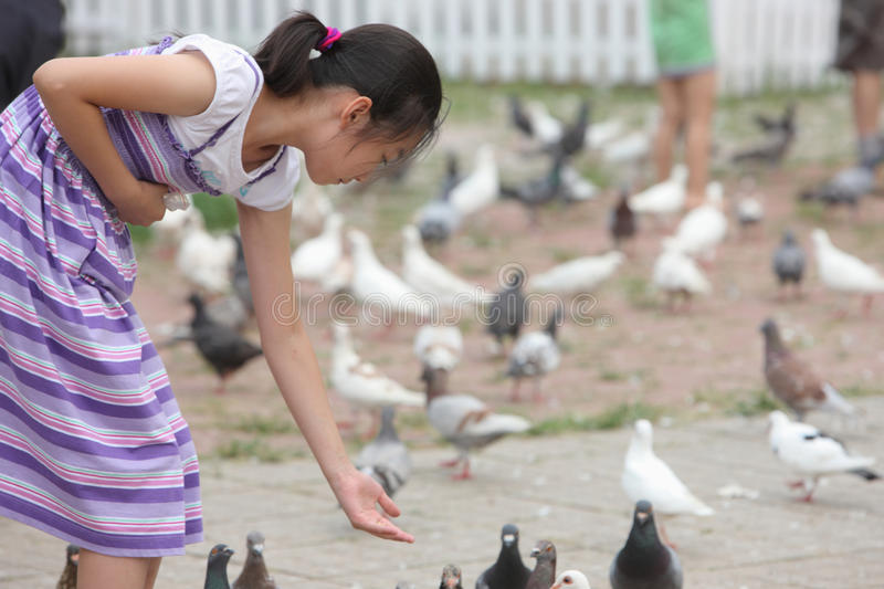 Download Chinese Little Girl Feeding Pigion Stock Photo - Image of animal, cute: 20999206