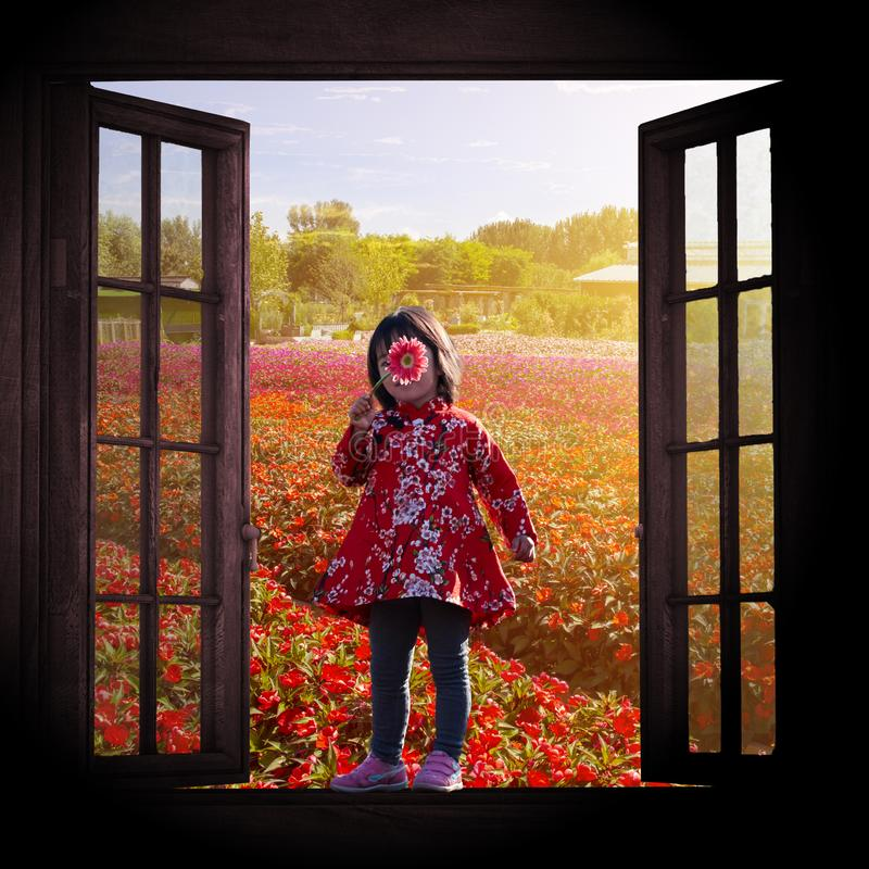 Pretty girl and flower field outside window. Chinese little girl in traditional red dress standing on a wood window, holding a chrysanthemums on her face