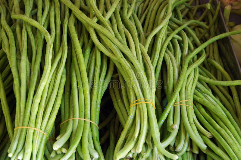 Chinese long beans bunches royalty free stock image