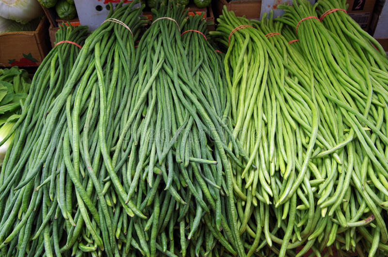 Chinese long beans tied and stacked. Chinese long beans awaiting market stock photo