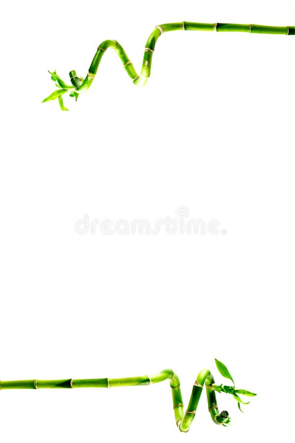 Chinese lucky bamboo close-up. Isolated on white. Background stock image