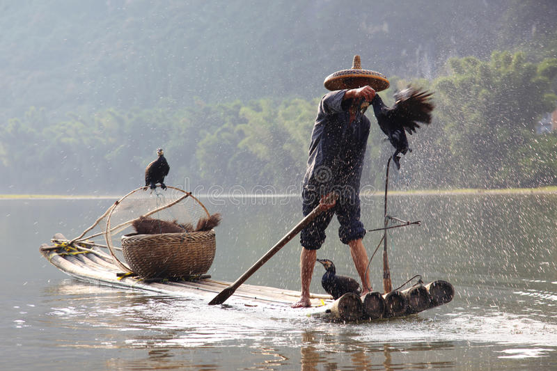 Chinese man fishing with cormorants stock images