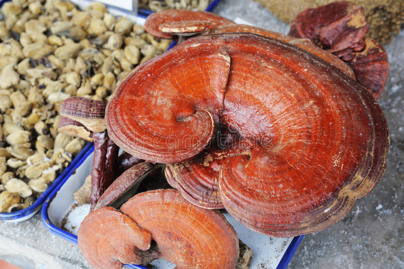 Chinese medicinal herb :linzhi. In the store royalty free stock images
