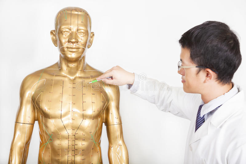 Chinese medicine doctor teaches acupoint on human model stock photo