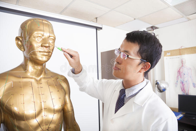 Chinese Medicine Doctor Teaching  Acupoint On Human Model Stock Photography