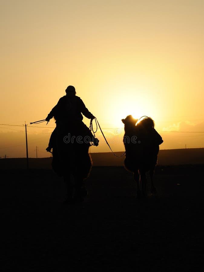 Chinese mensen die kameel berijden bij zonsondergang royalty-vrije stock fotografie