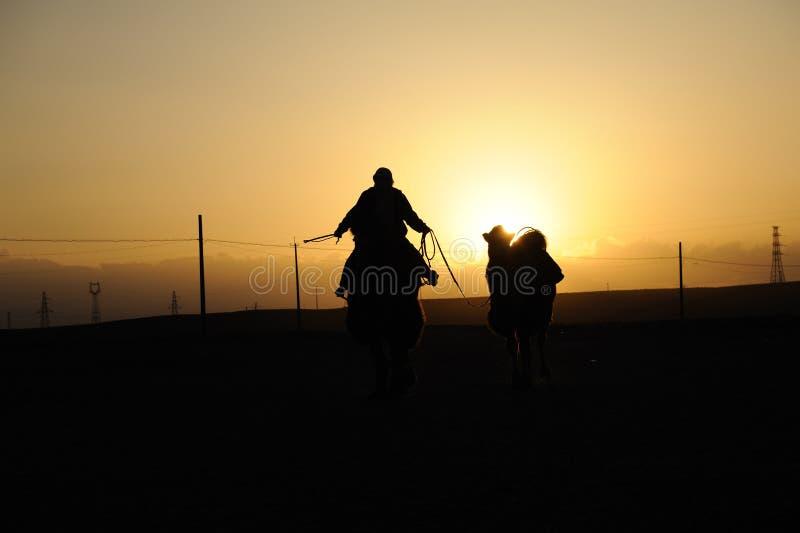 Chinese mensen die kameel berijden bij zonsondergang stock fotografie