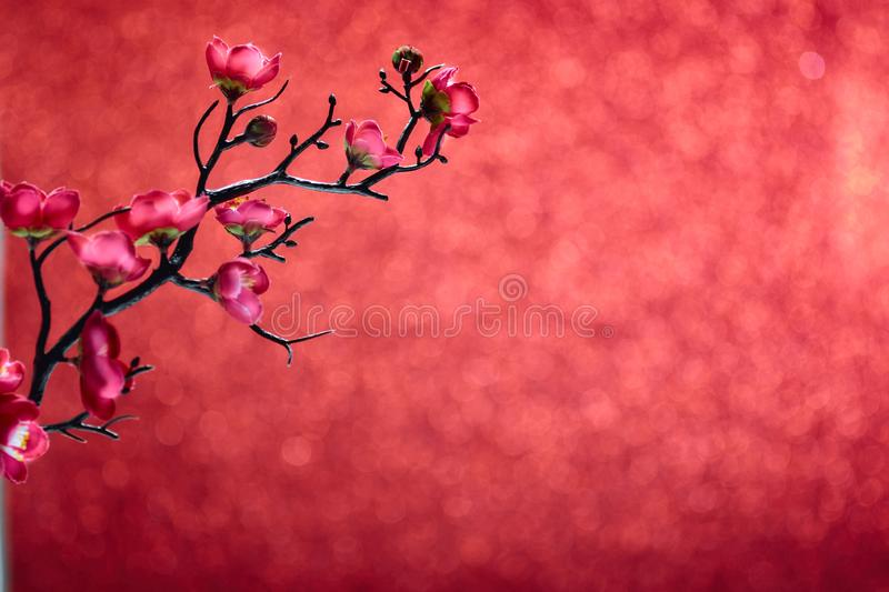 Chinese New Year 2020 Flowers plum blossom on red stock images