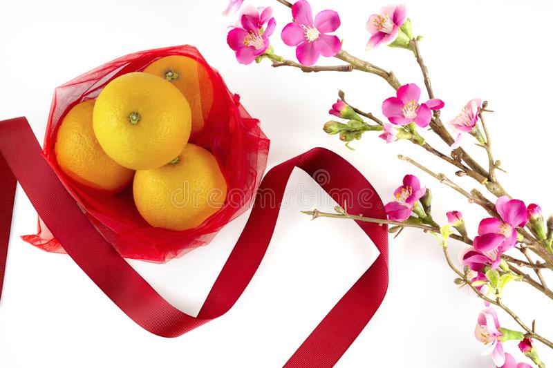Chinese new year fresh oranges and red ribbon with cherry blossom branch border on white background stock images