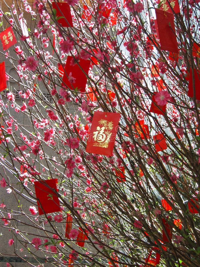 Chinese New Year Money Tree stock images