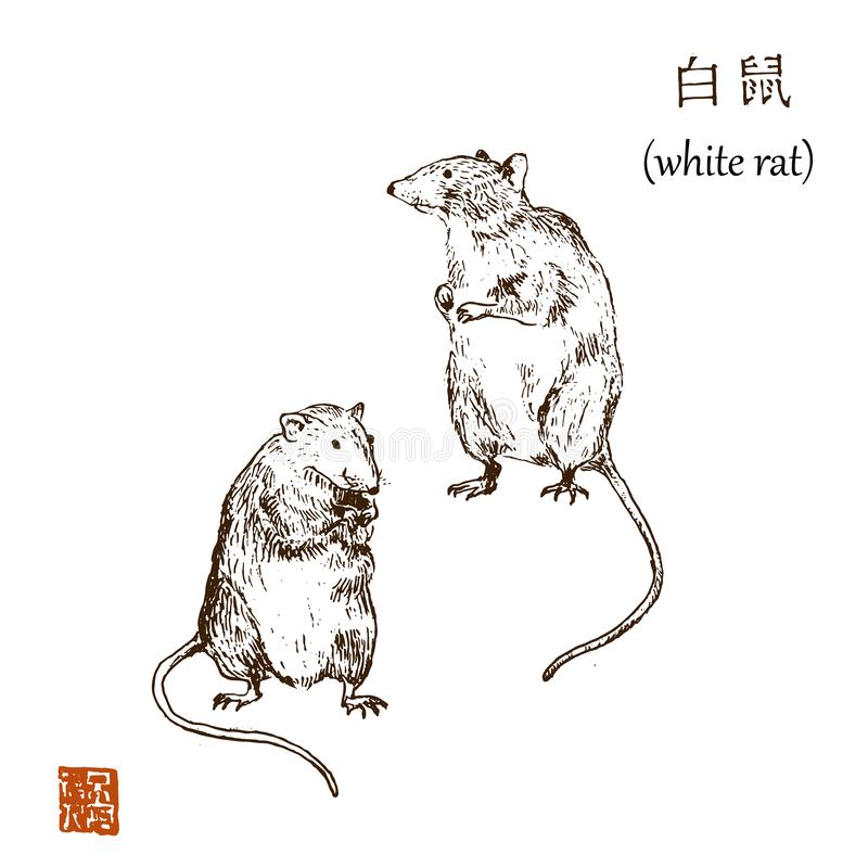 Chinese new year 2020 year of white rat vector illustration. Sketch rats and hieroglyph asian graphic. Hieroglyph says vector illustration