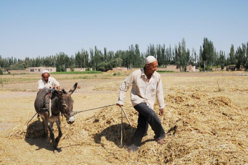 Chinese peasants threshing wheat royalty free stock photo