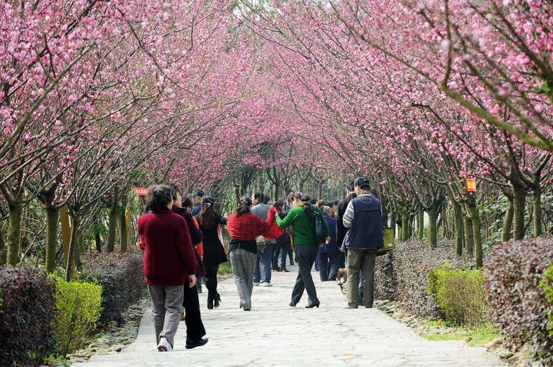 Chinese people spring outing stock image