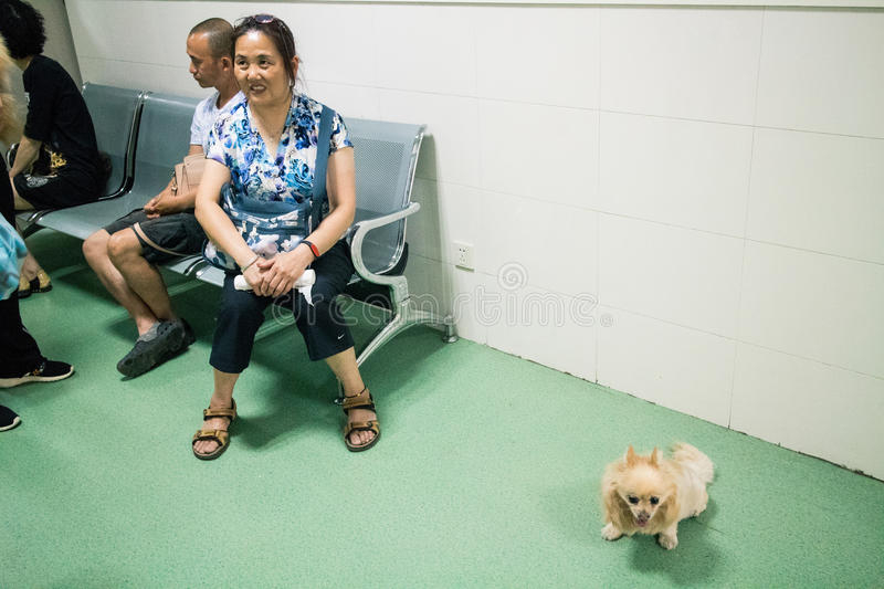 Chinese Pet Hospital stock images