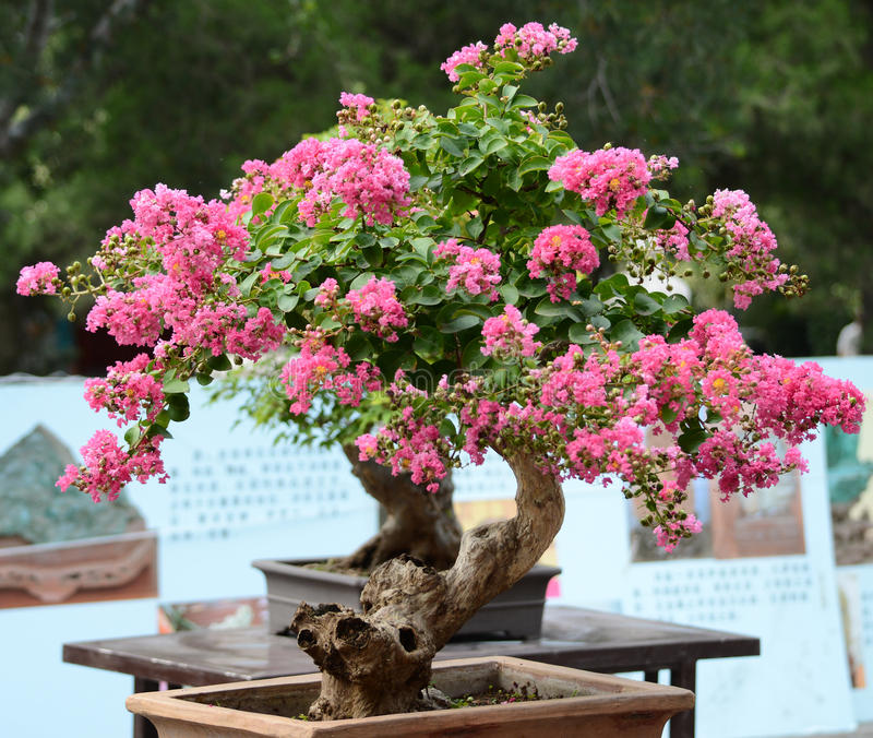 Chinese potted flower stock photography
