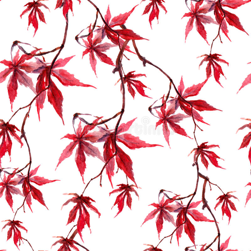 Chinese red maple leaves. Seamless pattern on white background. Watercolor. Chinese red maple leaves. Seamless pattern . Watercolor royalty free stock photo