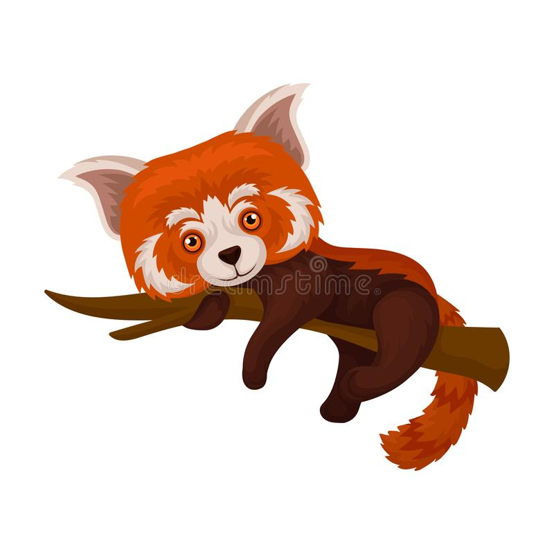 Chinese red panda lying on a tree branch, cute fluffy wild animal vector Illustration on a white background royalty free illustration