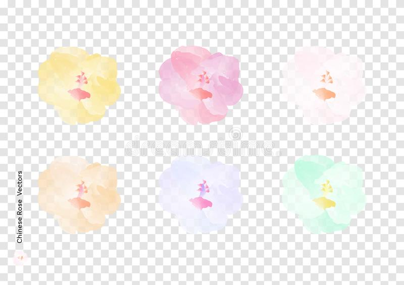 Chinese Rose or Hibiscus rosa sinensis flowers vectors with watercolor brush isolated on transparency background, beautiful floral royalty free illustration