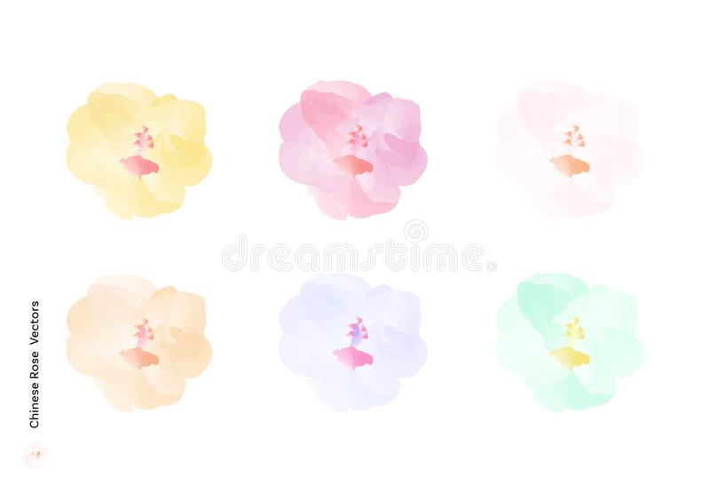 Chinese Rose or Hibiscus rosa sinensis flowers vectors with watercolor brush isolated on white background, beautiful floral elemen vector illustration
