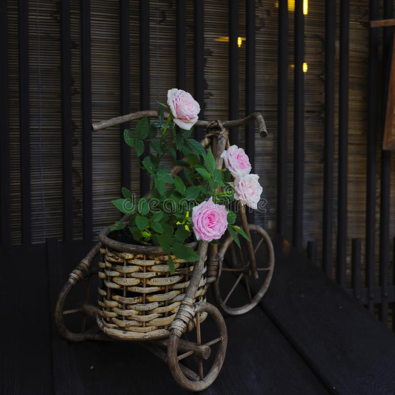 Chinese Rose in a Vase looking like a cart royalty free stock images