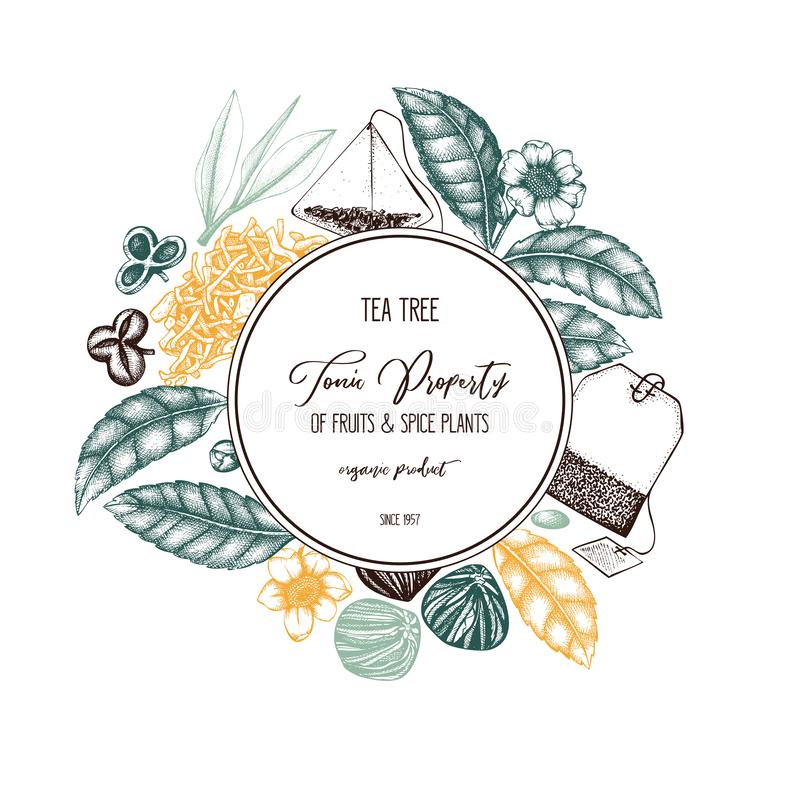 Vector design with hand drawn Chinese tea tree illustration. Decorative inking background with Camellia sinensis in flowers and le. Aves. Tonic plants vintage stock illustration