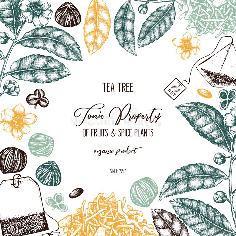 Vector design with hand drawn Chinese tea tree illustration. Decorative inking background with Camellia sinensis in flowers and le. Aves. Tonic plants vintage royalty free illustration