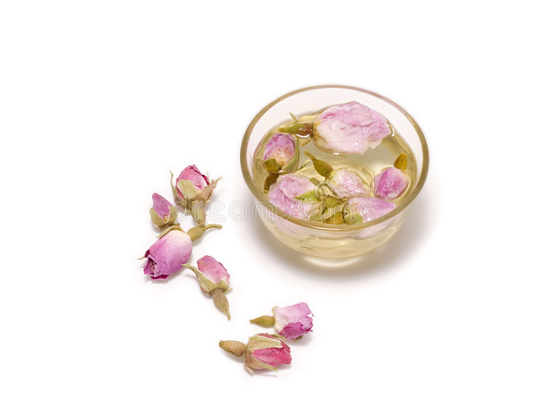 Chinese tea rose royalty free stock photo