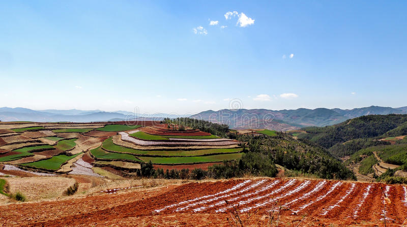 Chinese terrace farm with red soil. Red field, located in Yunnan, China. Yunnan province is located in South-west China, where the soil is red, and terrace can stock image